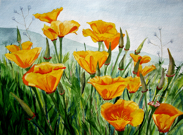 California Poppy Painting Lighthouses 2009 To 2011